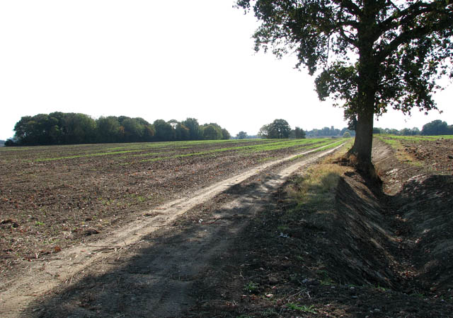 Track beside dry ditch