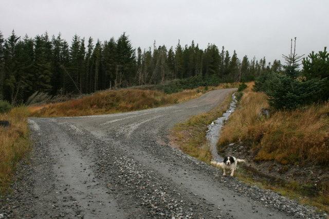Track junction in Dalchork Wood