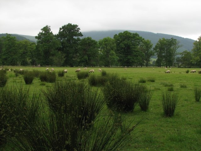 Field by Traquair