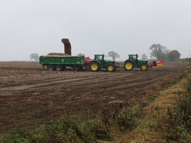 Lifting Potatoes near Saxby All Saints