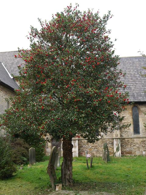 All Saints Churchyard, Winteringham