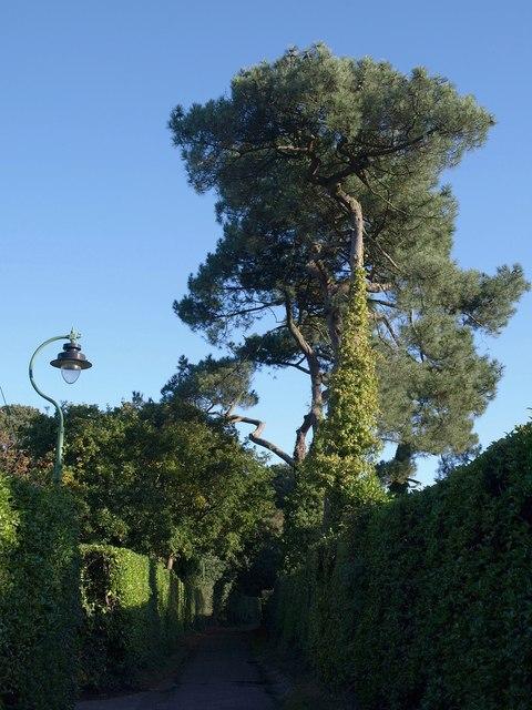Pines at Talbot Village