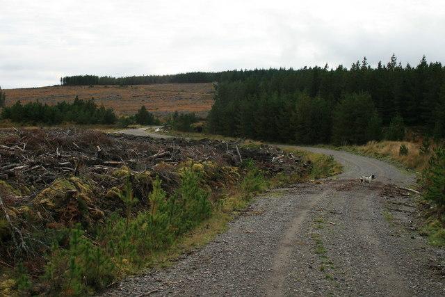 West of the Feith a Chaoruinn bridge