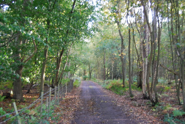 Footpath through Price's Wood