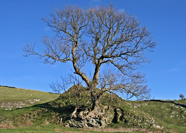Lone Tree, Pilsbury Castle
