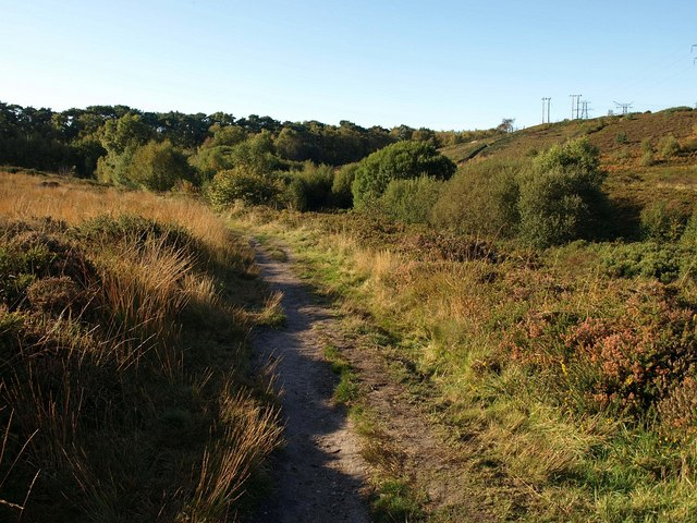 Bridleway on Talbot Heath