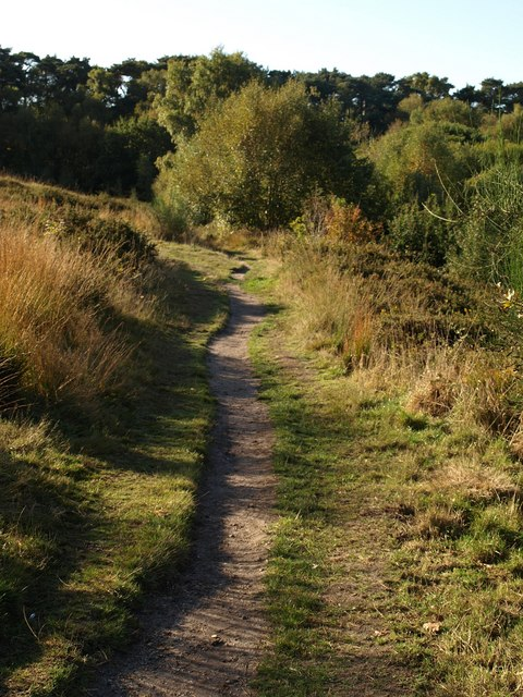 Bridleway on Talbot Heath (2)