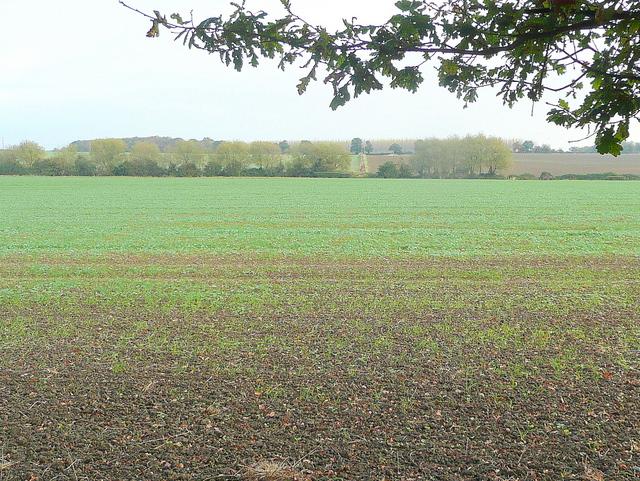 Arable land near Wormington