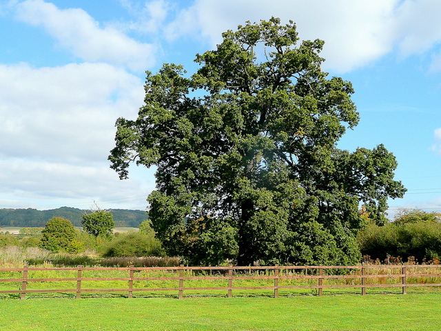 Oak by the Hobnails Inn