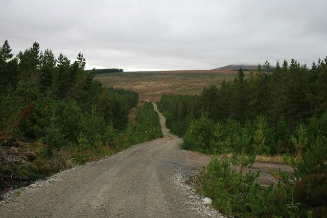 Lonesome trail through Dalchorch Wood