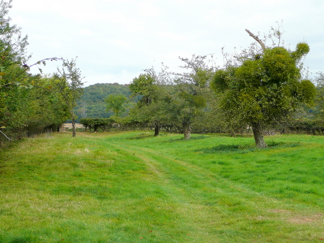 Old orchard at Great Washbourne