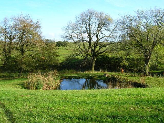 Pond at Skelshaw