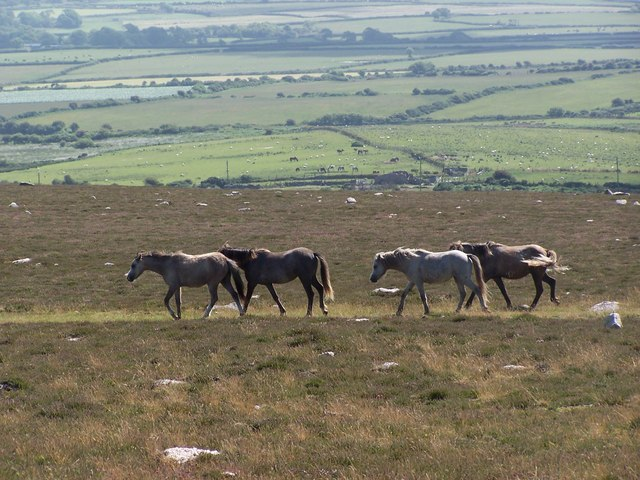 Horses on Rossili Downs