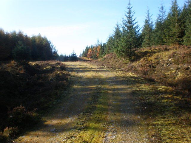 Track going up forest to Bunloinn Forest