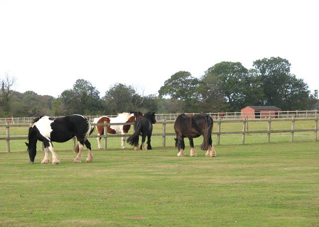 Horses at Redwings Horse Sanctuary