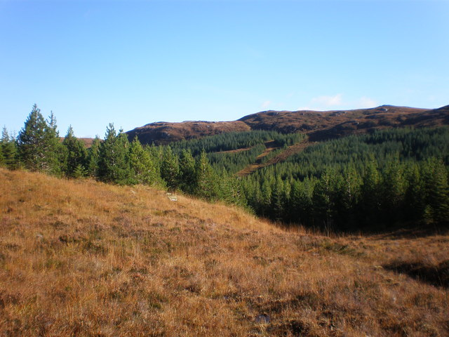 Meall Odhar from forest clearing