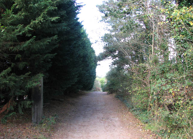 A shaded lane