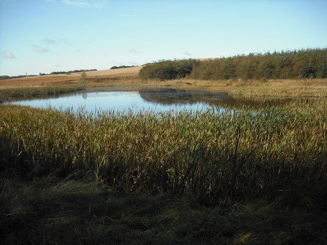 Pond north of Calderhead Road