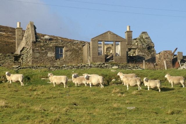 Sheep beside a ruined crofthouse at Braehead, Norwick