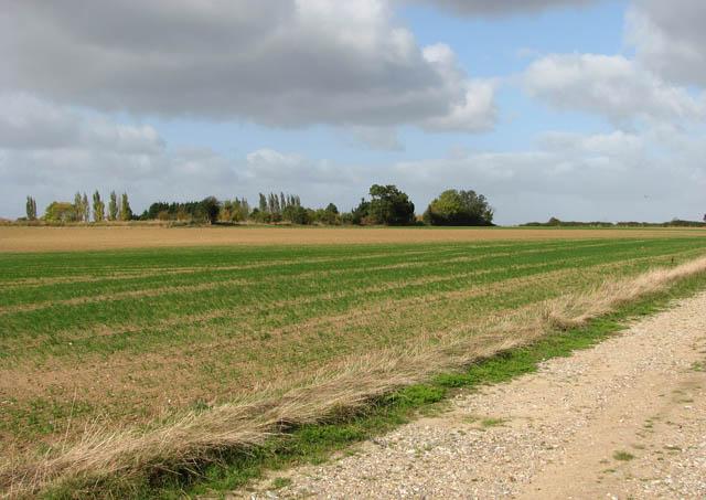 Field north of Loddon Road (B1136)