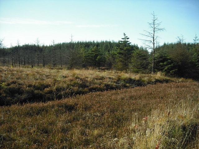 Forestry near Shotts