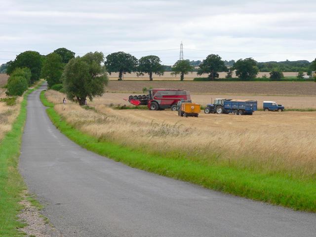 Woolley Leys Farm Plantation at harvest