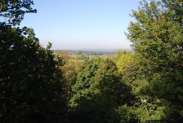 Trees below the Castle