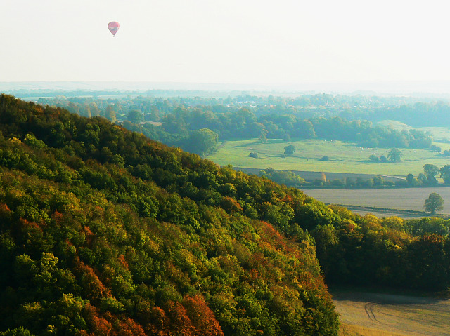 Balloon and Roundway Hill Covert, Roundway CP