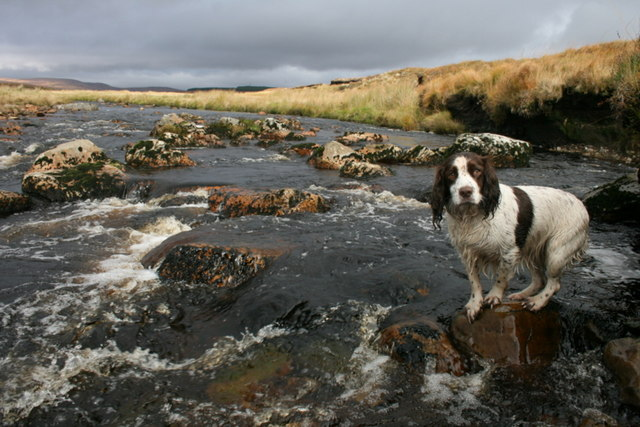 The spaniel gives the Tirry a sense of scale