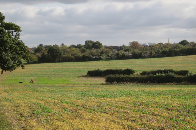 Missing hedges north of Leamington