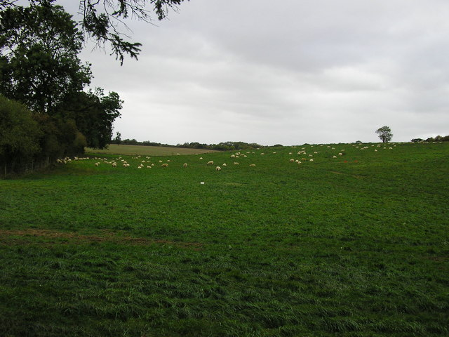 Field opposite Hesketh Court, Stretton