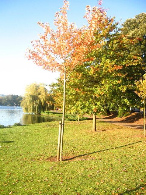 Sunny Autumn in Roath Park