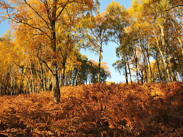 Woodland North of Loch Rannoch