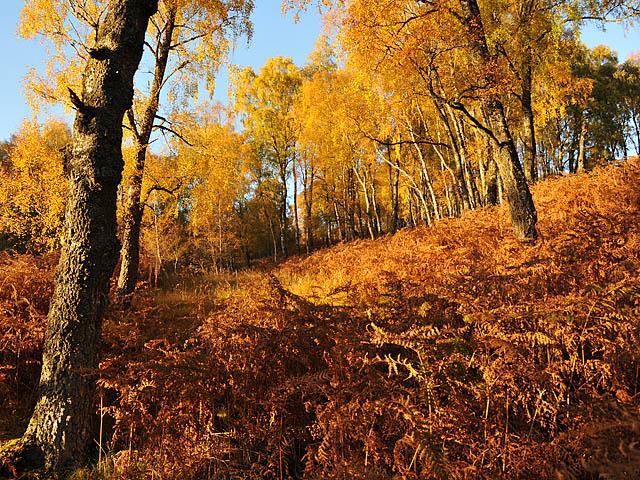 Autumn colour north of Loch Rannoch
