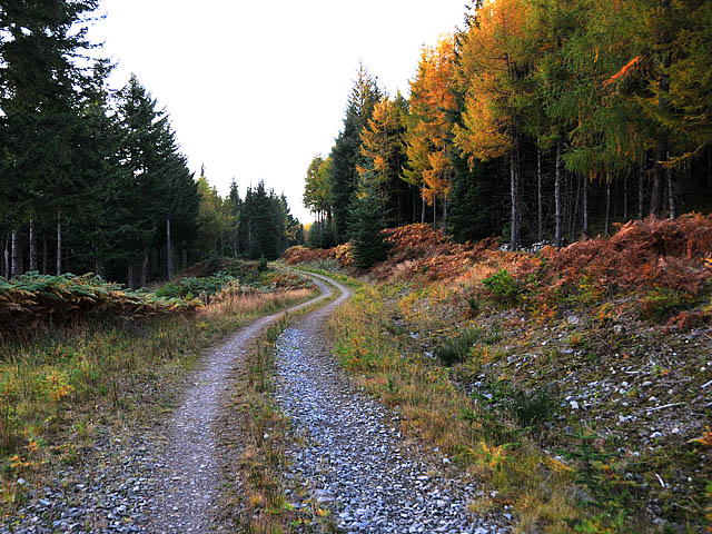 Forest track north of Loch Rannoch