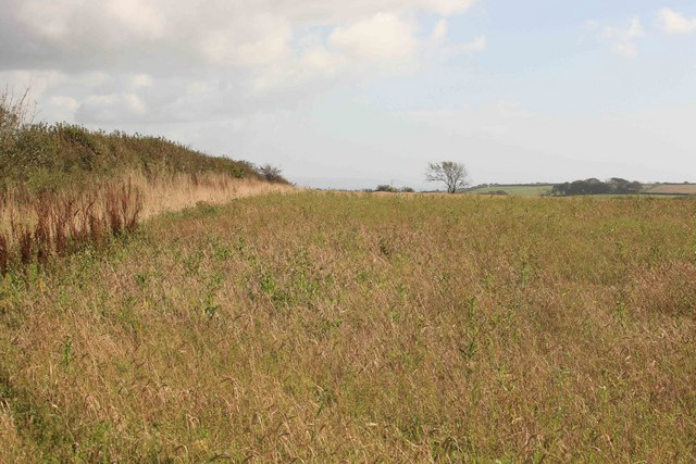 Field by the Trigg Point