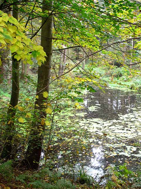 Woodland pond in Rowbank Wood