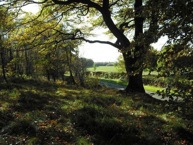 Mixed woodland
