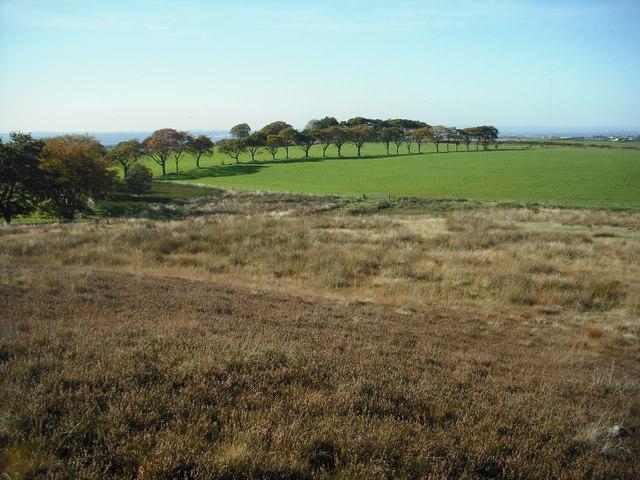 Heather,marsh and pasture