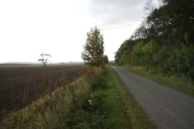 Roxton Wood side