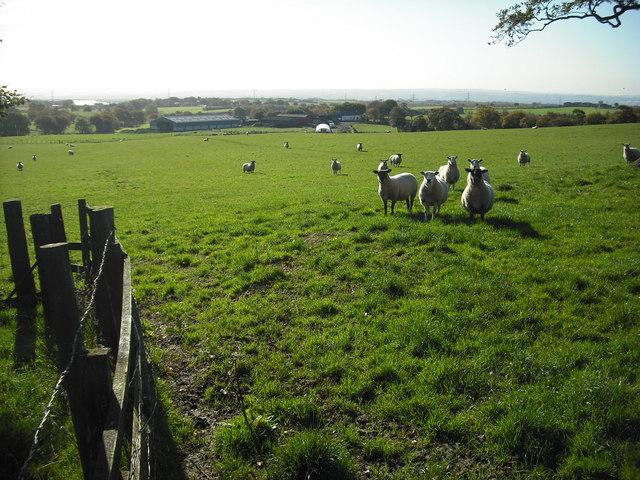 Goodockhill Farm