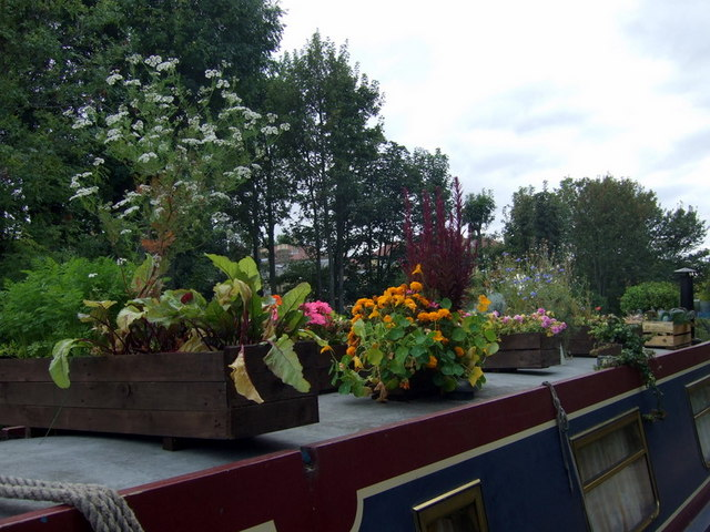 Green fingers on the Regent's Canal