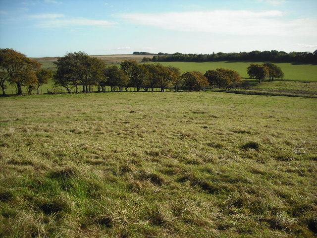 Sighthill field