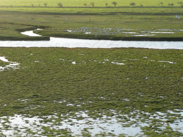 Birds resting on the edge of Brunton Burn