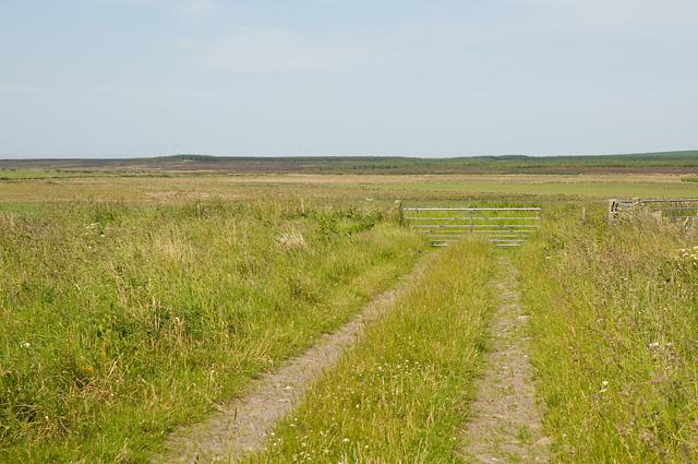 Farm Track and Gate near Lochend