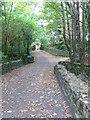 S7909 : Footpath into Tintern Woods by Eirian Evans