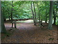 SU7686 : Great Wood by Shaun Ferguson