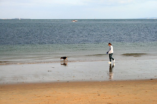 Dog Walking Rules In Nairn