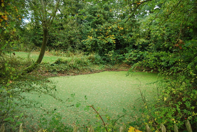 Algae covered pond by the Wealdway