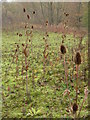 SE1447 : Ben Rhydding Gravel Pits by Derek Parkinson